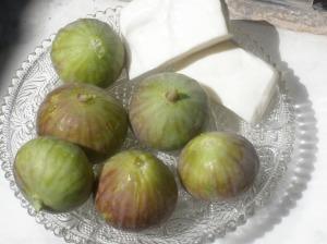 Fatima's Fig Tree